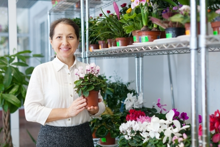 florist with Cyclamen  at flower store Stock Photo - 18655004