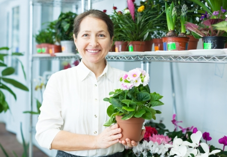 Female florist with auricula (Primula) at flower store  photo