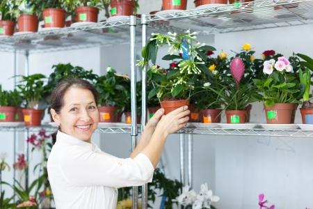 Female florist with Stephanotis at flower store Stock Photo - 18654979