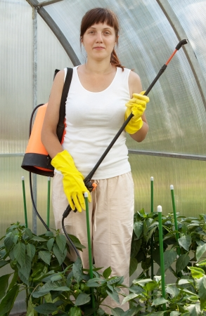 insecticidal: Woman spraying pepper  plant in greenhouse