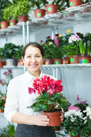 woman in flower shop near the shelves with Cyclamen Stock Photo - 18714732