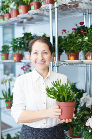 jade plant: Happy mature woman chooses Crassula at flower store Stock Photo