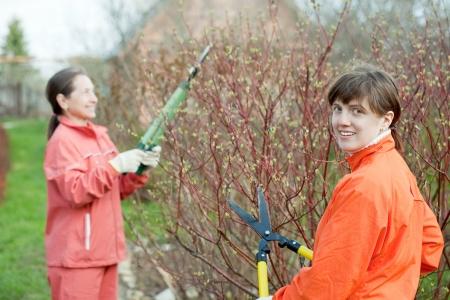bush trimming: Two women trimming bough of an bush