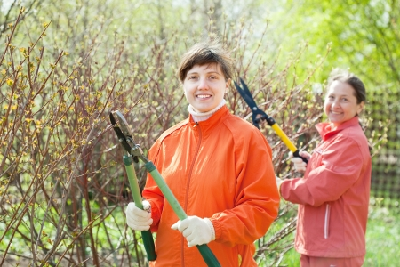 Two women cutting shrubbery at garden photo