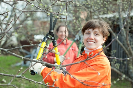 pruning: Two women pruning apple tree in the orchard