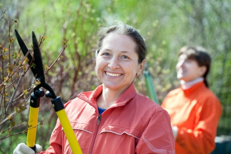 Female gardener cuts branches in the garden in spring photo