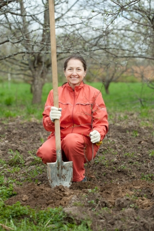 Happy  mature woman planting fruit tree at garden in spring photo