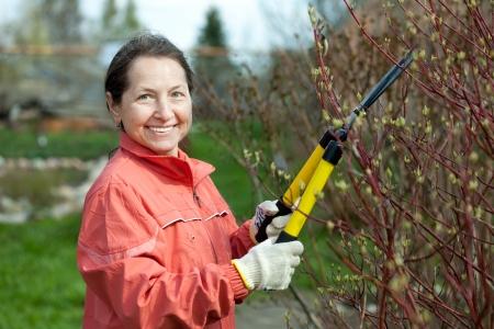 bush trimming: Mature woman trimming bough of an bush in spring garden