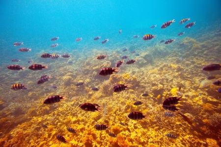 reefscape: tropical fishes at coral reef area Stock Photo
