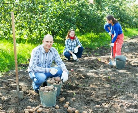 family harvesting potatoes in vegetable garden photo