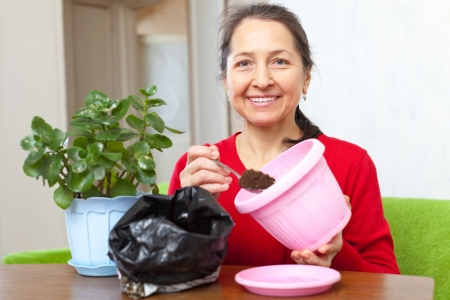 woman transplants  flower in flowerpot photo