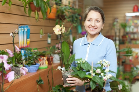 Female florist with Phalaenopsis at flower store Stock Photo - 19426113