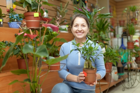 Female florist with ficus plant (Bonsai) at flower store  Stock Photo - 19426125