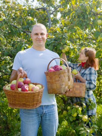 Happy couple gathers apples in the garden photo