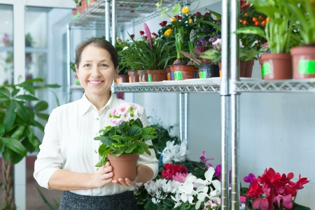 Happy mature woman with  auricula (Primula) plant in flower store photo