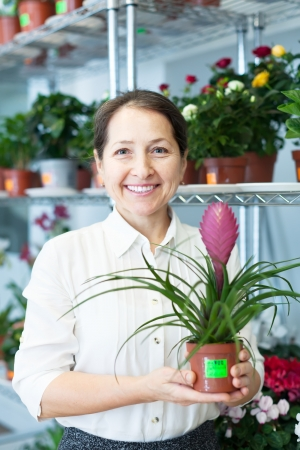 tillandsia:  florist with Tillandsia at flower store  Stock Photo