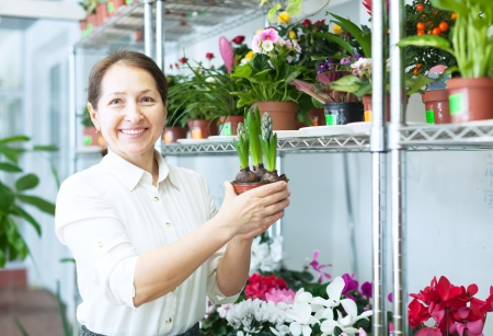 woman looks hyacinth (Hyacinthus) plant at flower store photo