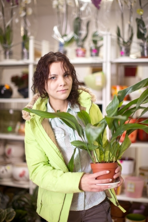 aspidistra: Woman chooses aspidistra flower in a flower shop