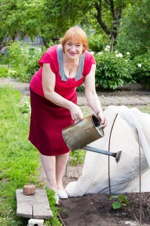 Volwassen vrouw drenken cucmber plant met gieter