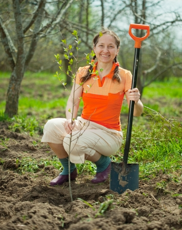 Happy  mature woman planting tree at garden  photo
