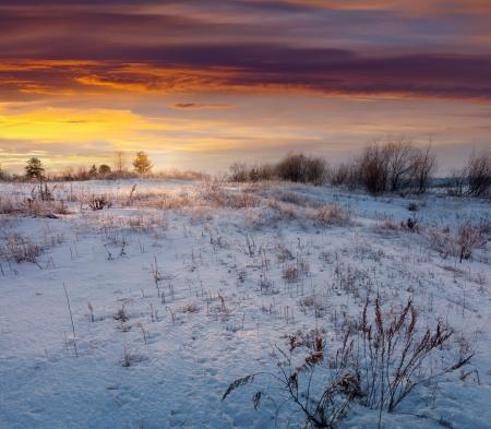 beauty farm: Winter landscape. Meadow under snow in wintry morning Stock Photo