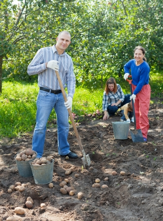Happy family harvesting potatoes in field Stock Photo - 20096748