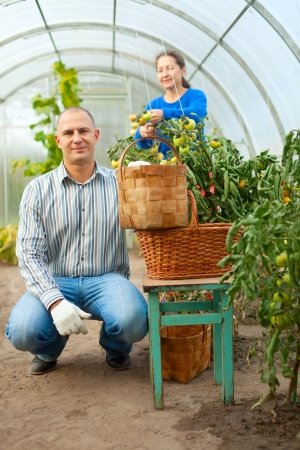 Man and woman in tomato plant  at hothouse photo