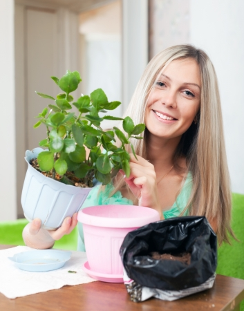 transplants: Young woman transplants potted Kalanchoe flower at her home