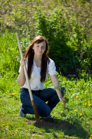 replanting: Young woman planting raspberry in garden