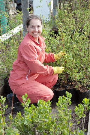 Mature woman with sprouts in pots  at plant photo