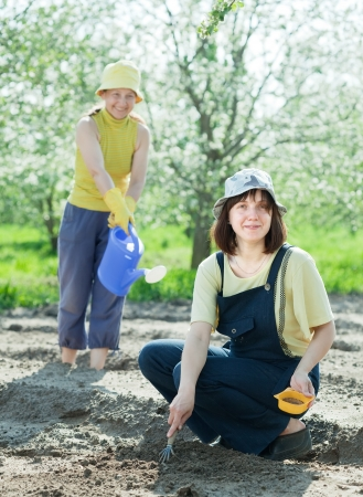 sows:  Two  women sows seeds in bed at field