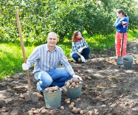 family harvesting potatoes in vegetable garden Stock Photo - 20792010