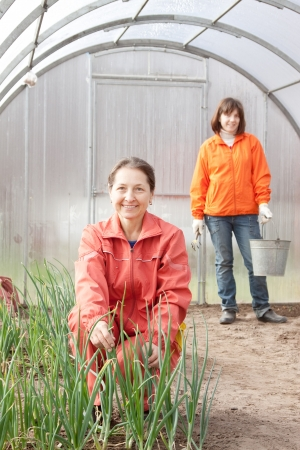 organics:  Happy women works at greenhouse in spring