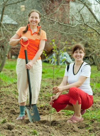 Happy women planting fruit tree at orchard  in spring photo
