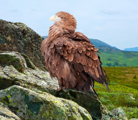 wildness: eagle on rock against wildness background Stock Photo