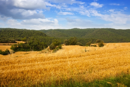 Fields at mountain valley.  Catalonia photo