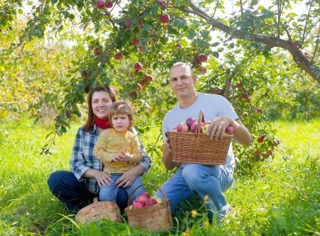 Happy  family picks apples in the orchard photo