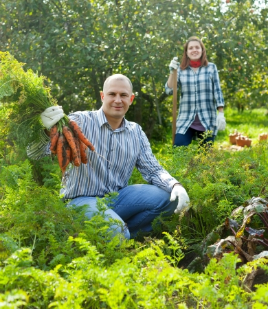 Happy couple  harvesting carrots in field photo