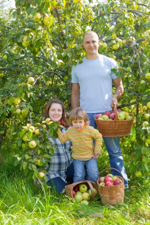 Happy family with  harvested apples in garden Stock Photo - 21225977