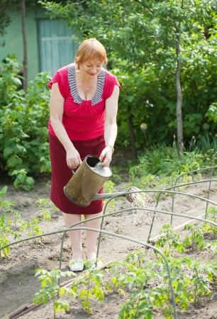 Mature woman watering plant at vegetables garden photo