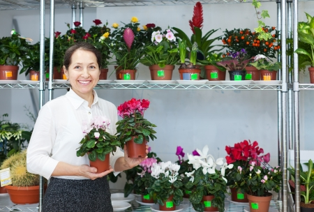 Happy mature woman looks Cyclamen  at flower store Stock Photo - 21409893