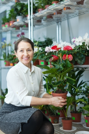 Happy mature woman with anthurium plant in flower store Stock Photo - 21409899