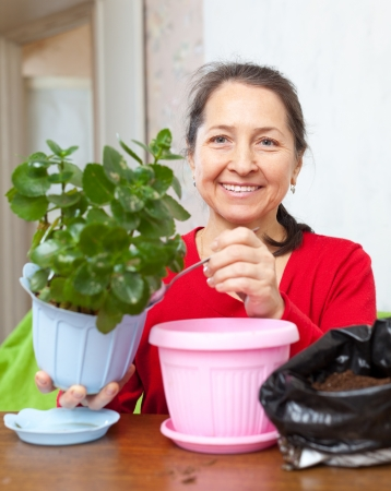 Happy mature woman transplants  Kalanchoe flower in flowerpot at her home photo