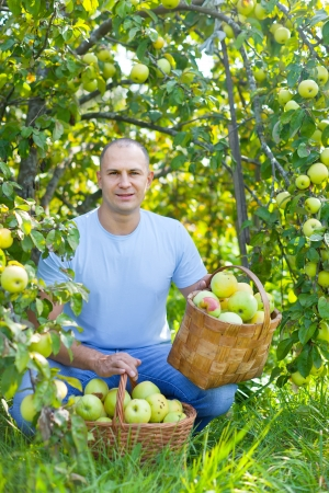 Middle-aged man with basket of harvested apples in garden photo