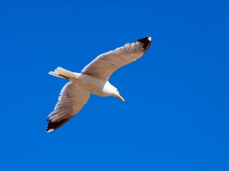 Hovering seagull against the sky photo