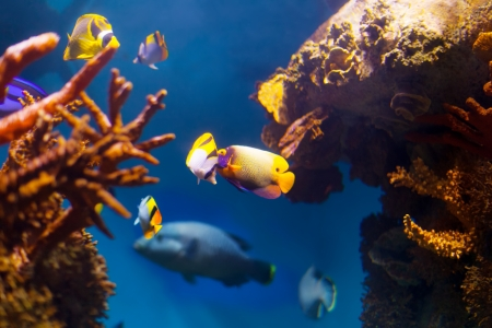 reefscape: underwater life in coral reef area