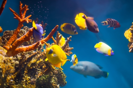 reefscape: Multicolored exotic fish at coral reef in sea water Stock Photo