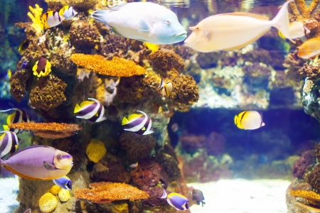 reefscape: fish at coral reef in tropical water