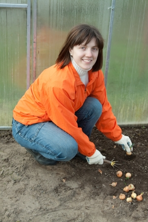 Young  woman sets onion in soil at greenhouse photo
