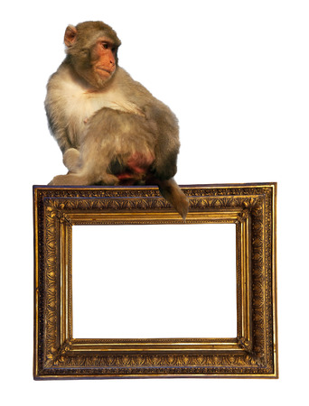 picture frame with macaca. Isolated over white  photo